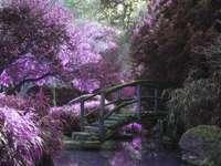 Ponte con fiori di ciliegio