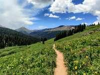 campo de hierba verde cerca de la montaña bajo un cielo azul
