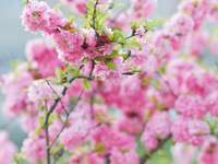 rózsaszín virág tilt shift lencsében