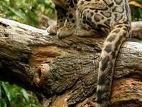Wild cat sitting on a tree