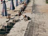gatto bianco e marrone sul percorso di cemento grigio durante il giorno