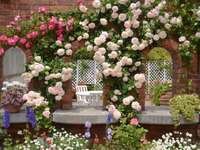 Hegymászó rózsák