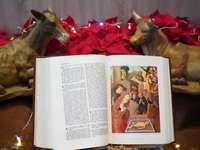 stránka bílé knihy s potiskem hnědého a bílého psa