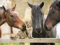 cavalos com um gatinho