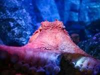 recife de coral marrom e branco