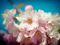 bílý a růžový květ v makrofotografii