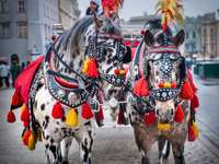 cavalos em Cracóvia