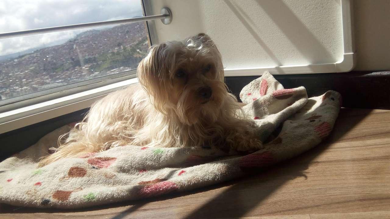 Letto pes se opaluje u okna?