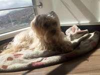Αφήστε το σκυλί να κάνει ηλιοθεραπεία στο παράθυρο;