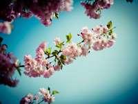 ροζ και λευκό λουλούδι στη μακρο φωτογραφία