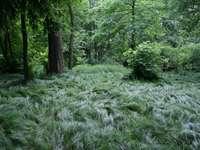 Covor de iarbă