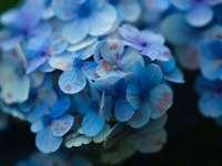 niebieski i biały kwiat w fotografii z bliska