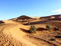 Dune de nisip din deșert