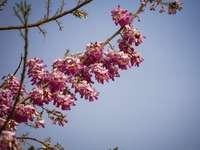 różowy i biały kwiat pod błękitnym niebem w ciągu dnia