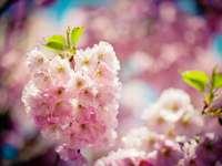 růžový a bílý květ v makro snímku