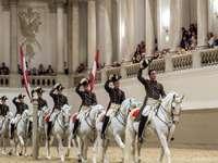 cavalos em uma escola de equitação espanhola