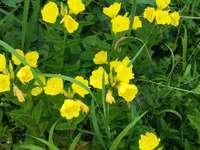 flori galbene pe iarba verde