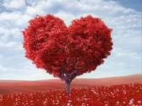 coração de árvore