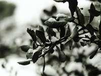 hojas verdes en la lente de cambio de inclinación