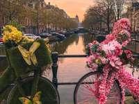 В Амстердам.