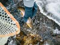 osoba v modré bundě a bílých kalhotách se žlutými rybami