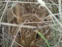 Заек, скрит в полето