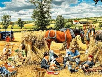 Wheat gathering