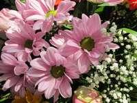 różowe kwiatki z gęsiówką