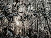 árbol blanco y marrón durante el día