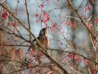 brązowy i czarny ptak na gałęzi drzewa brązowy