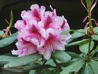 różowy kwiat w makro