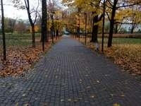 Jesien w parku