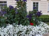 vara în grădina palatului
