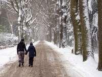 2 души, ходещи по заснежена пътека между дървета