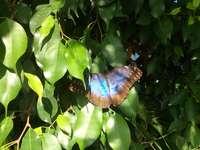Motyl na liściach
