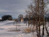hnědé stromy na sněhem pokryté zemi pod šedou zamračenou oblohou