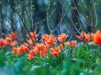 orange Blüten mit grünen Blättern