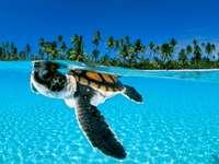 tartaruga no mar