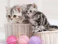 gatitos, hilo