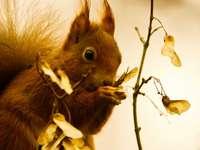 esquilo marrom em galho de árvore marrom