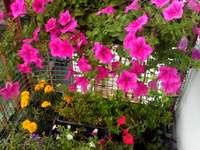 Балкон в цветя