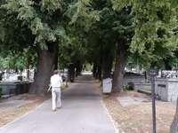 aleea copacilor bătrâni din cimitir