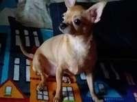 Mon petit chien FiFi