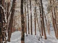 barna fák a hóval borított talajon napközben
