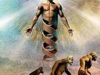 EVOLUŢIE......................