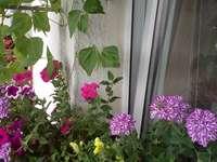Virágok az ablakon kívül