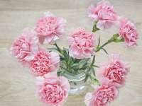 розови карамфили