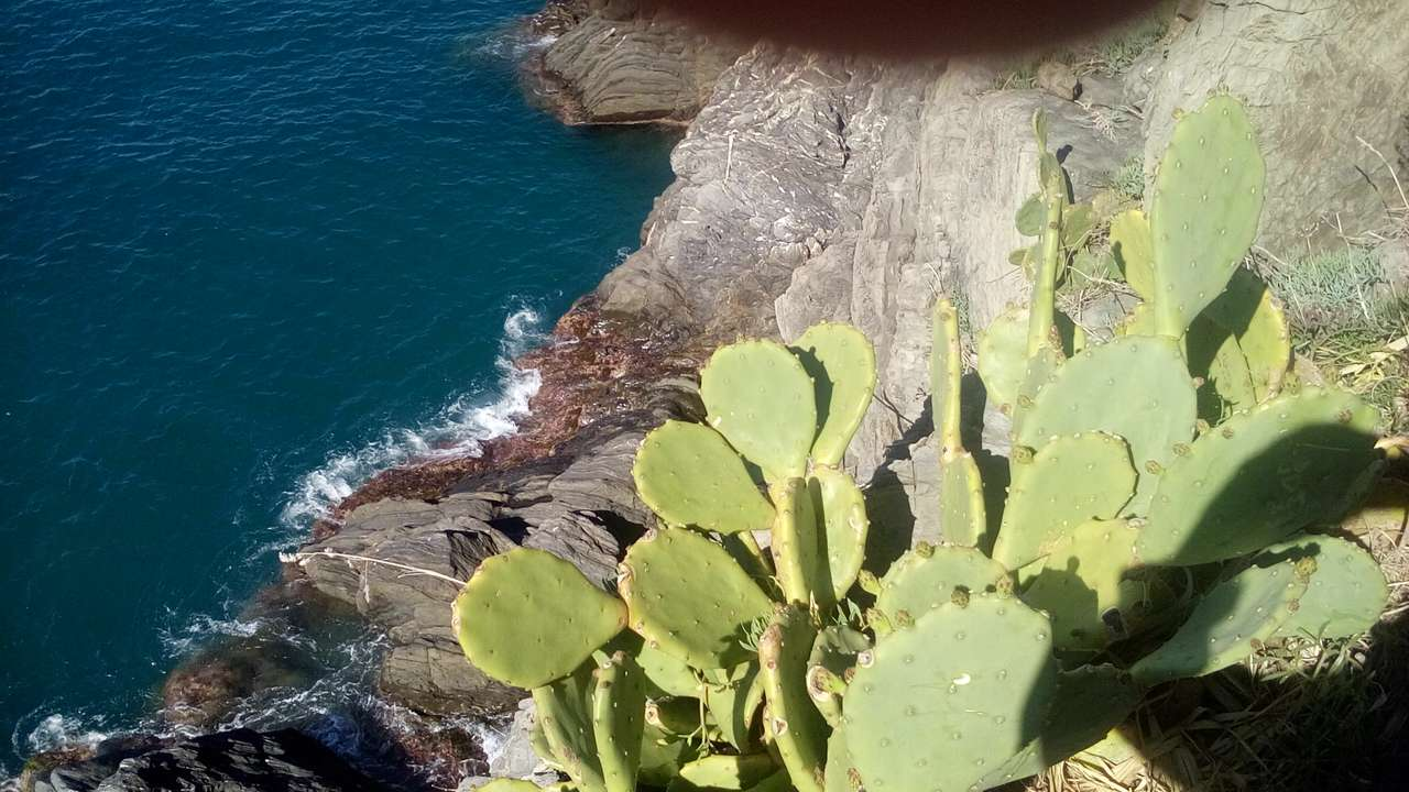 Cinque Terre - vegetație
