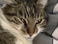 LilaSuper Gato