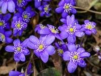lila Blüten in Tilt-Shift-Linse